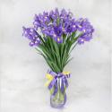 Buchet primavaratic 25 iris