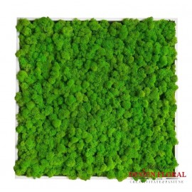 Tablou cu licheni Green XL