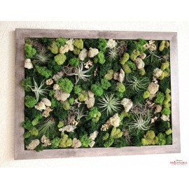 Tablou cu licheni stabilizati si plante aeriene