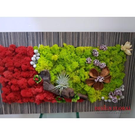 """Tablou cu licheni """"Air Plant"""""""