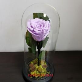 Cupola The Sweetest lila