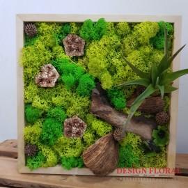 """Tablou cu licheni """" Tillandsia Drift"""""""