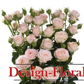 Trandafir Tross- Minirose