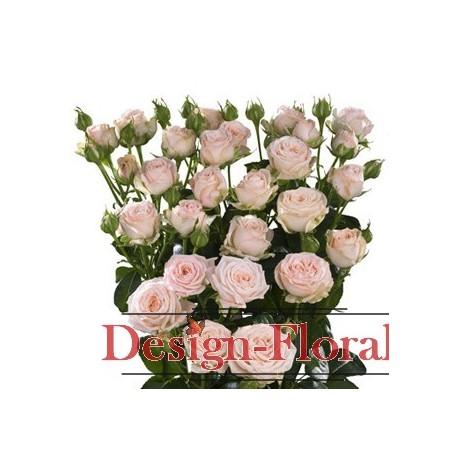 Trandafir Tros