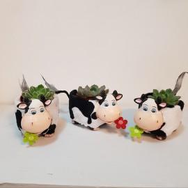 """Aranjament """"Ferdinand"""" cu plante suculente"""