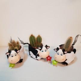 """Aranjament """"Ferdinand"""" cactus"""