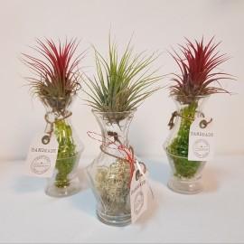 Aranjament cu plante aeriene Tillandsia