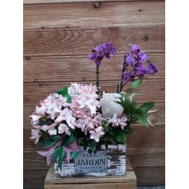 Aranjament plante orhidee mov