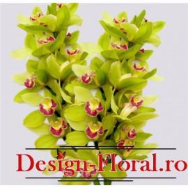 Orhidee Imperiala mare