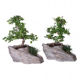 """Bonsai Oriental """"Rock Formation"""""""