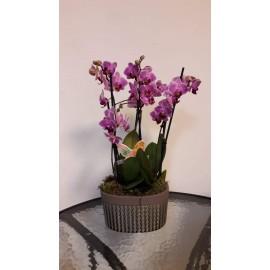 Aranjament Duo Orchid