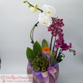 Aranjament Classy Orchid
