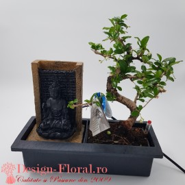 Bonsai Carmona Magical Fountain