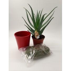 Pachet Aloe