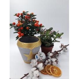 Pachet plante decorative