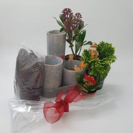 Aranjament plante DIY