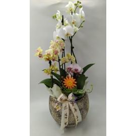 "Aranjament Orhidee "" Glamour """