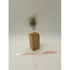 Aranjament plante Aeriene