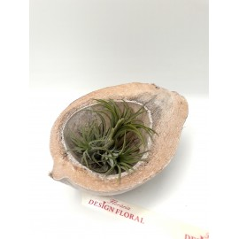 Aranjament simplist plante aeriene