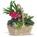 Cosuri cu plante