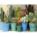Cactusi si plante suculente
