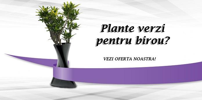 plante verzi pentru birou